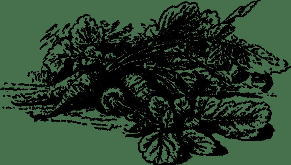 Bild: Gemüse